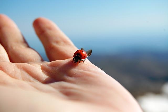 Une coccinelle sur une main.