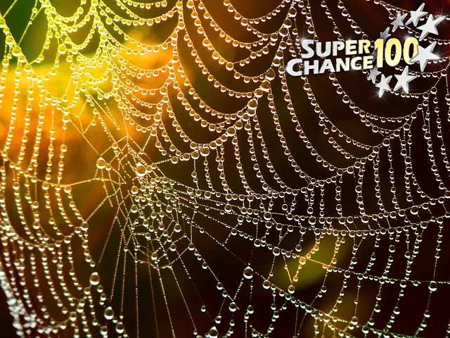 Toile d'araignée mouillée.