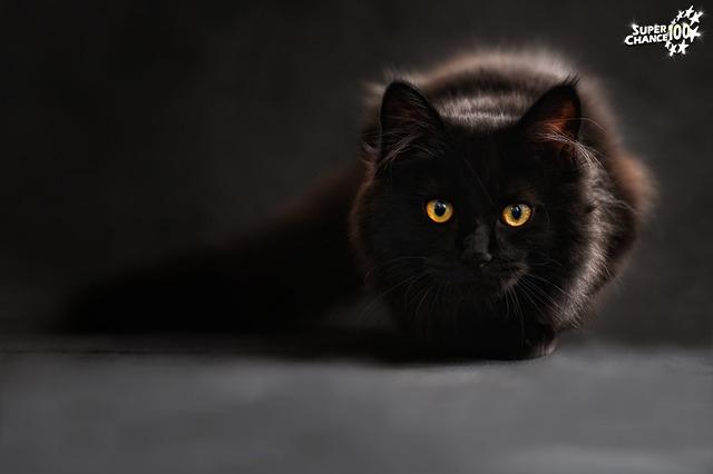 Un chat noir, objet de crainte chez les superstitieux.