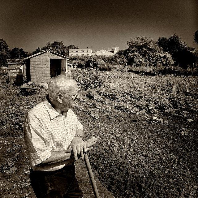 Un jardinier observant son jardin.
