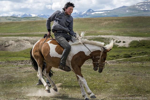 Un dresseur chinois sur un cheval sauvage.