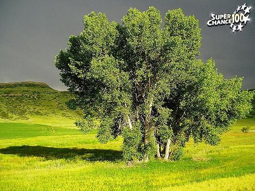 Trois arbres dans une plaine.