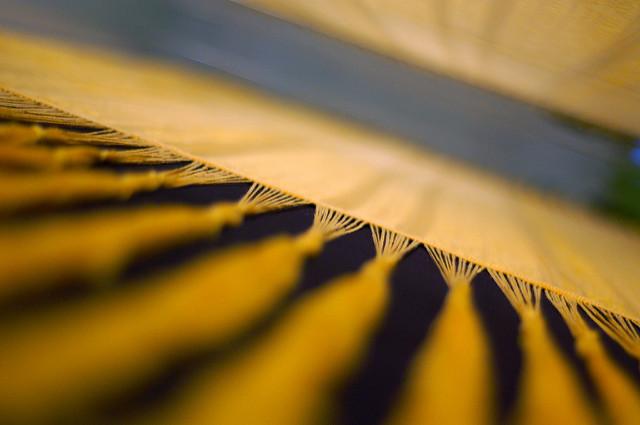 Photographie d'une planche de tissage de soie d'araignée.