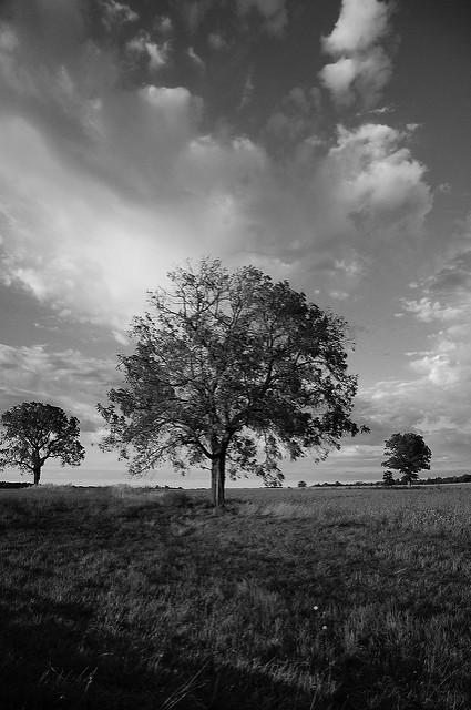 Trois arbres devant le soleil en noir et blanc.