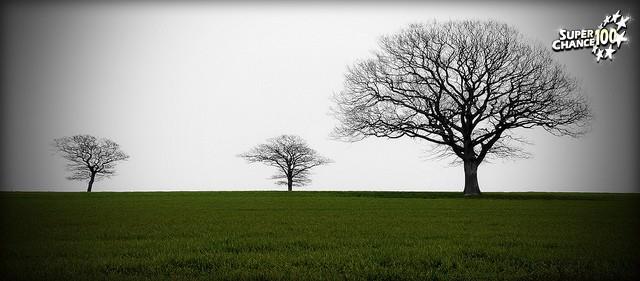 Photo de trois arbres dans une plaine.