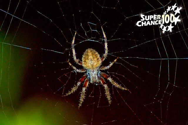 Photographie d'une araignée multicolore sur sa toile.