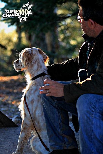 Un chien avec son maître regardant au loin
