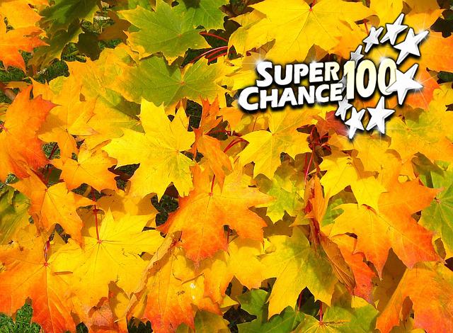 Résultats des tirages au sort de l'automne !