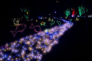 Un chemin lumineux en décoration de Noël.